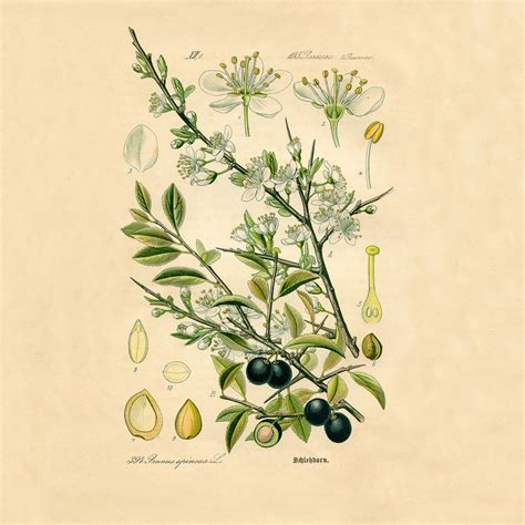 botanical print wallpaper mary hubley s power of paintings antique art blog