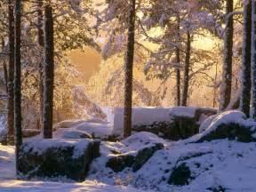fondos de pantalla 3d paisajes lugar nevado vista completa nevado bosque de pinos fondos de pantalla nevado bosque