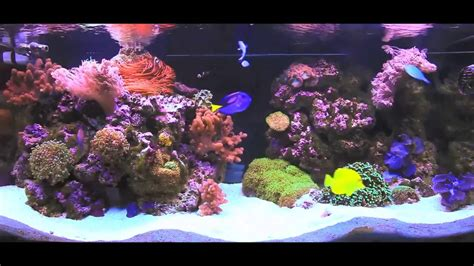 aquarium layout inspiration aquarium inspiration 90 gallon reef aquarium youtube