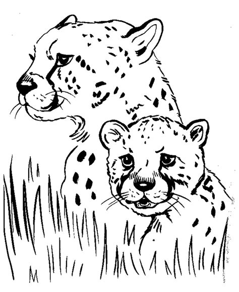 Pictures To Print To Color Free Printable Cheetah Coloring Pages For Kids by Pictures To Print To Color