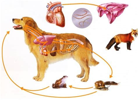 puppy rapid breathing fast breathing in dogs why breathing fast and causes and symptoms