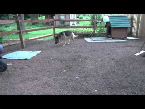 how to make a dog area in your backyard dog potty area by bobs pet stop youtube