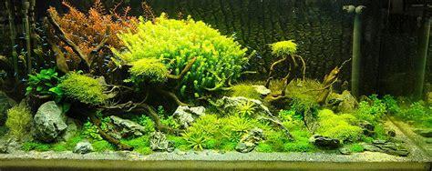 Aquascape Aquarium Plants Adrie Baumann And Aquascaping Aqua Rebell