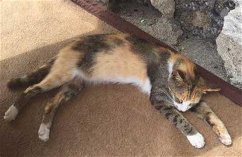 404378 un chat pour la vie 500 d amende c est peu pour la vie d un chat aim 233