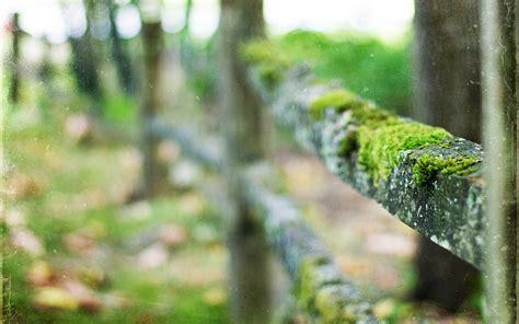 fence moss macro blur hd wallpaper nature  landscape