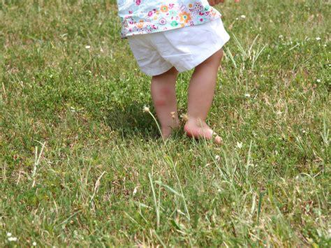 Pilze Im Rasen Anzeichen by Rotspitzigkeit Tipps Gegen Die Rasenkrankheit