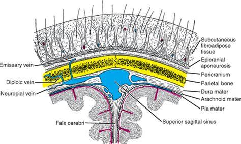 cross section synonym scalp radiology key