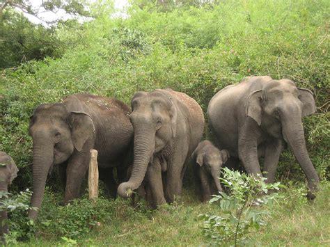 lthttpbasica primariatic sep gob mxgt contaminacion african animals mating videos newhairstylesformen2014 com