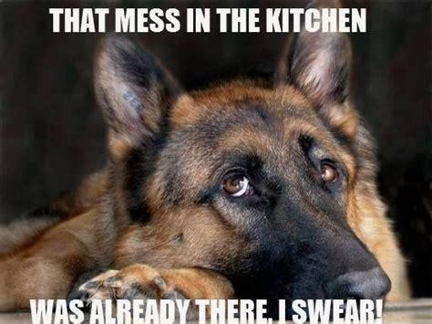 German Shepherd Memes - 120 best german shepherd memes images on pinterest