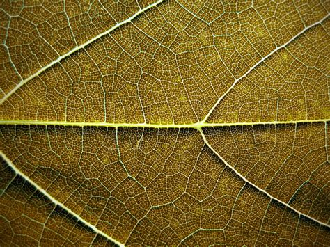 patterns in nature leaves brown leaf texture background image