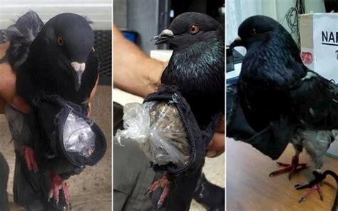 Tshirt Pablo Ione detienen a una mensajera un ave de verdad por