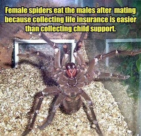 Spider Memes - funny spider meme picture
