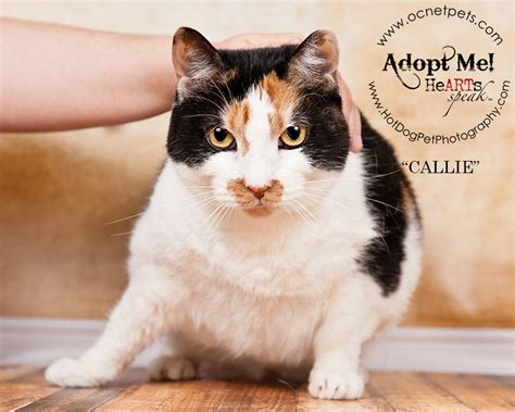 adopt a puppy orlando adopt a senior pet month cats in orlando fl 187 pet photography