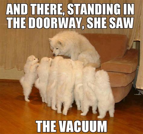 Funny Puppy Memes - funny dog memes the ultimate collection dog training