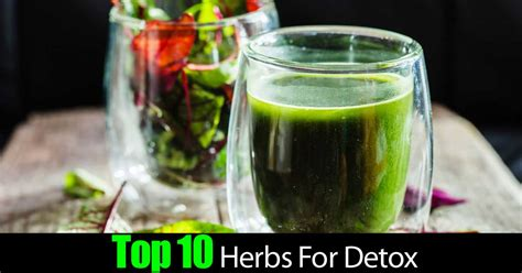 Top Detox Herbs by Top 10 Herbs For Detox