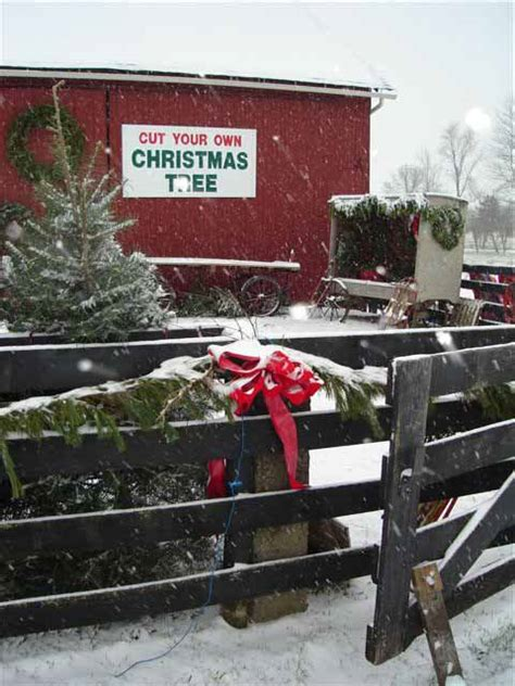 country pines christmas tree farms dayton ohio