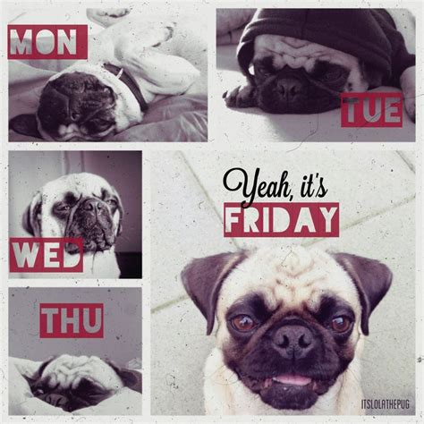 pug friday happy weekend to all you pug out there proclaimations
