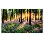 Sun Shining Through Spring 4K Wallpapers  Free Wallpaper