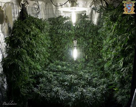 grow schrank aeroponik hydroponik grow growreports cannabisanbauen