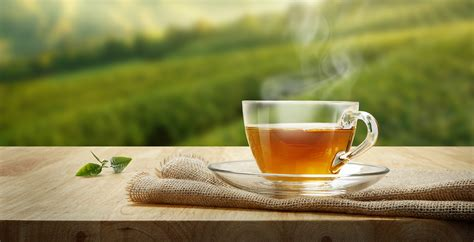 How Much Do You Lose On A Tea Detox by How Much Green Tea To Lose Weight Is Helpful Green Tea