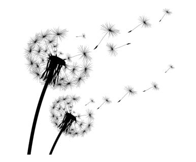 Tattoo Aufkleber Pusteblume by Wandtattoo Pusteblume Stickers Pinterest Tattoo