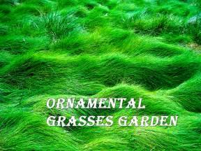 Backyard Landscaping Design Software Free by Design Great Landscape Designs Using Ornamental Grasses