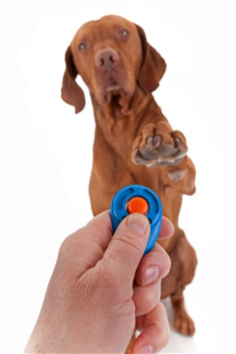 puppy clicker does clicker work with all dogs totally gundogs