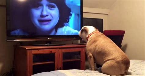 imagenes graciosas viendo television perra que ama las pel 237 culas de terror