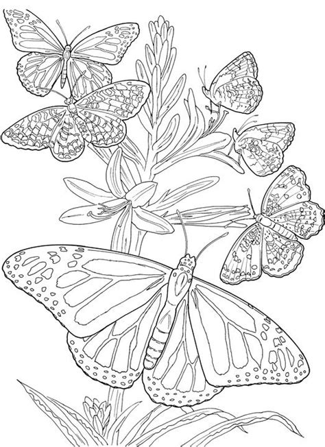 butterflies coloring book for adults books butterfly coloring page