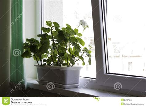 office pots office flower pot royalty free stock photo image 24177615