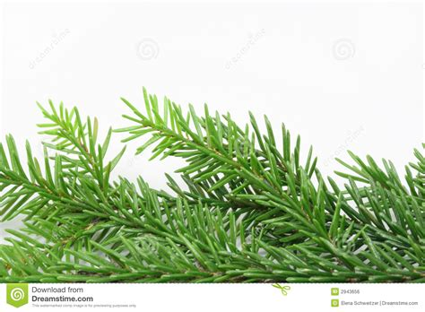 christmas tree bough royalty free stock image image 2943656