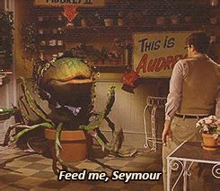 feed me seymour meme feed me seymour