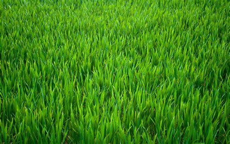 wallpaper of green grass green grass background by soulart2012 on deviantart 5432