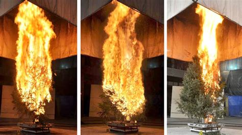 how to determine burnt christmas tree bulbs how fast does a tree burn my merry