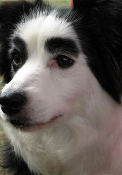 do dogs eyebrows dogs with eyebrows on eyebrows dogs and salma hayek