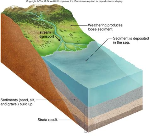 diagram of how sedimentary rocks are formed module 3 part b evolution