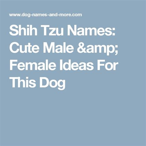 shih tzu boy names 25 best ideas about names on puppy names