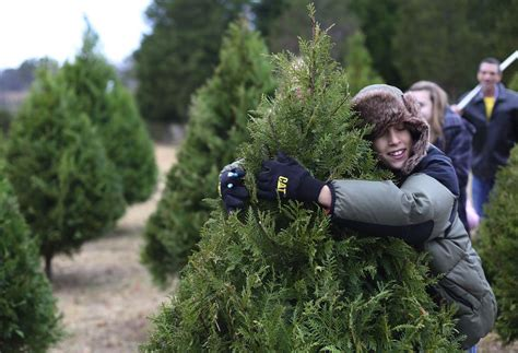 hubbards christmas tree farm shell tree farm gallery timesdaily