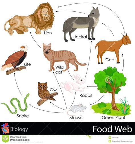 ecosystem food web diagram diagram taiga food web diagram