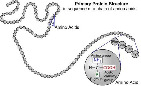 protein biology definition biology for proteins and amino acids
