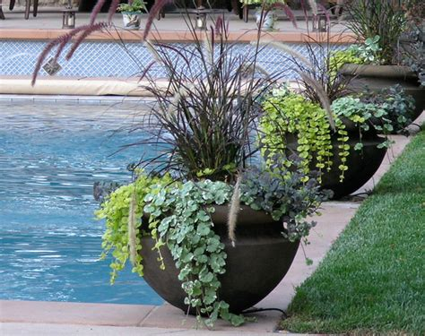 swimming pool landscaping plants pool sun covers blog