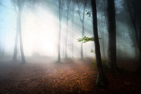 Painting Interior Walls by Mysterious Forest 3000 X 2000 Forest Photography