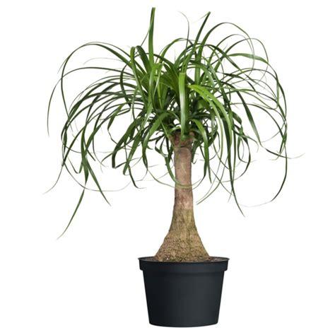 moderne zimmerpflanzen moderne zimmerpflanzen als frische deko f 252 rs zuhause