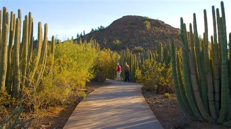Az Botanical Gardens by Desert Botanical Garden In Arizona Expedia