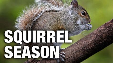 spring squirrel season opening  tn wrcbtvcom chattanooga news weather sports