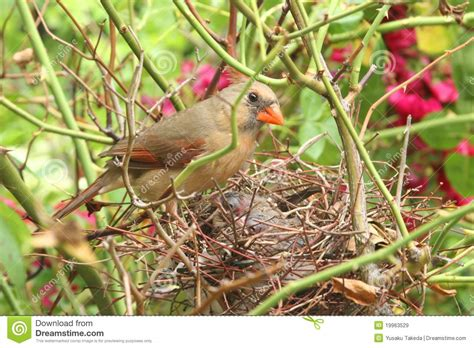newborn baby bird in a nest royalty free stock images