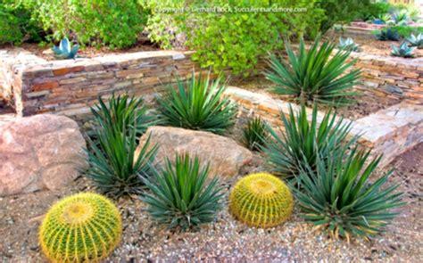 Ideal Desert Landscaping Plants At Home Bistrodre Porch Desert Rock Garden Ideas