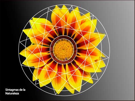 figuras geometricas naturales sintagma de la naturaleza el gremio del dise 241 ador
