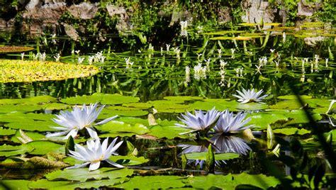 giardini mortella i giardini la mortella un paradiso tropicale nel cuore