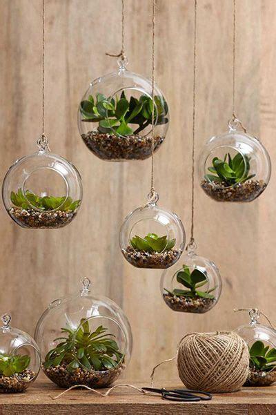 top  succulent decorating ideas hanging air plants